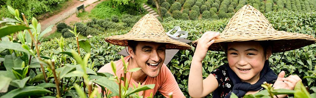 enta de té mayoreo florité en China